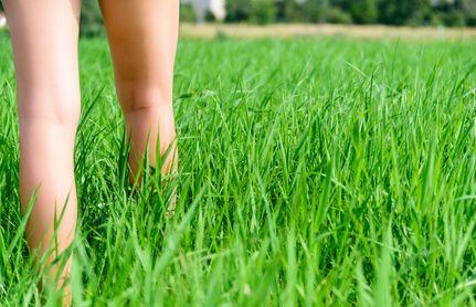 Achtung Grasmilben im Garten