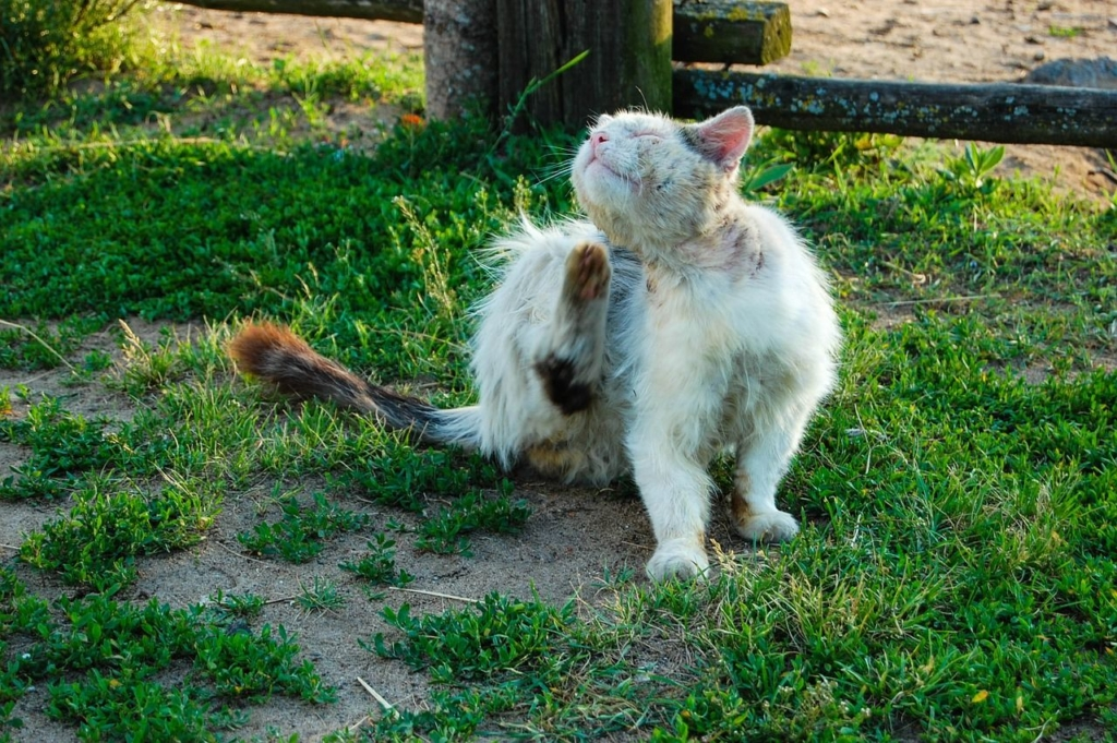 Katze mit Milben